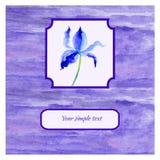 Irisez l'illustration violette d'aquarelle de fleur sur le fond blanc, texture faisante souffrir décorative, vecteur tiré par la  Photographie stock