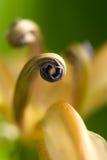 Irisez la fleur Image libre de droits