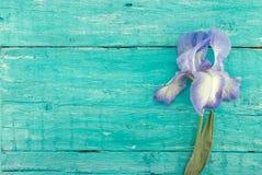 Irisez la fleur sur le fond en bois rustique de turquoise avec la station thermale vide Photos stock