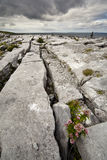 The Irish Burren. In Clare county Royalty Free Stock Image