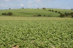Irish cabbage farm Stock Photography