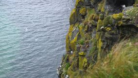 Cliff where gulls nest. Irish cliff where gulls nest stock video