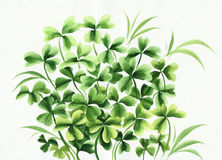 Irish clover Royalty Free Stock Photos