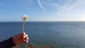 Irish coast near dublin. Irish coast and flower near Dublin Royalty Free Stock Photography