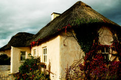 Irish cottage in Waterford. With bushy walls Royalty Free Stock Image