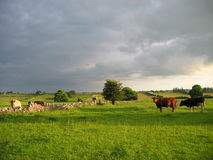 Irish countryside. Evening light royalty free stock photography
