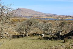 Irish countryside in March, co.Mayo. Early spring Irish countryside on a sunny day. This particular landscape is possible to see when cycling or walking the royalty free stock photo