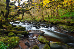 Irish creek of Clare Glens. In Co. Limerick Royalty Free Stock Photo