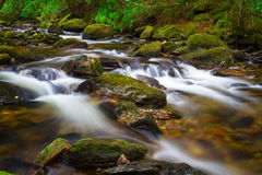 Irish creek of Clare Glens Stock Photo