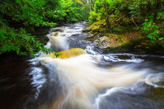 Irish creek of Clare Glens Stock Photography