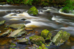 Irish creek of Clare Glens Stock Image