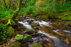 Irish creek of Clare Glens Royalty Free Stock Image