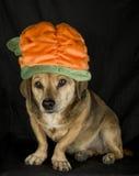 Irish dog Stock Image