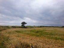 Irish field Stock Photo