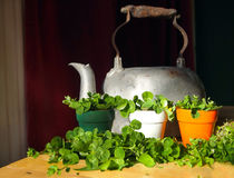 Irish Flower Pot Shamrocks. Green shamrocks displayed in a trio of flower pots in the colors of the Irish flag with an antique tea kettle stock images