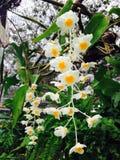 Irish Flower Royalty Free Stock Image