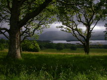 Irish Forest stock image