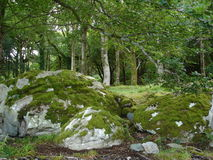 Irish forest. In the middle of an Irish forest Royalty Free Stock Images