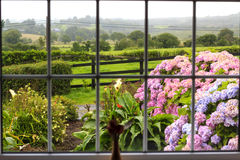 Irish garden through the window. View at the wet morning garden from inside through the large window. Further flowered garden there is a green Irish countryside Royalty Free Stock Photos