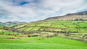 Irish green fields just outside of Dingle on Dingle peninsula Royalty Free Stock Photography