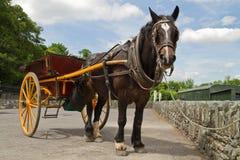 Irish horse stock photo