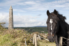 Irish horse and ancient round tower Royalty Free Stock Images