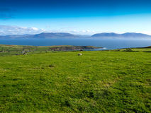 Irish impression. View from the Dingle Peninsula to the Iveragh peninsula with green grass, a blue ridge and a clear blue sky with grazing animals Royalty Free Stock Photos