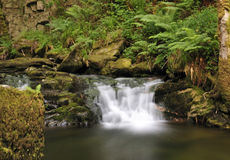 Irish jungle Stock Photo