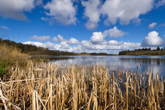Irish lake in Co. Clare. Spring sunshine over lake in Co. Clare, Ireland Royalty Free Stock Image