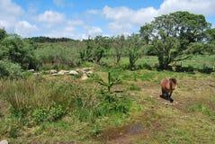 Irish landscape. An Irish landscape with an horse near a lake royalty free stock image