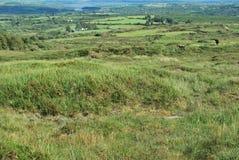 Irish landscape Royalty Free Stock Images