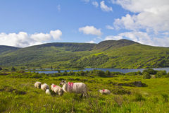 Irish landscape Stock Photography