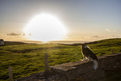 Irish landscape with a dog Stock Photos