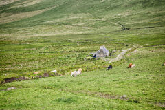 Irish landscape. An image of a beautiful irish landscape with an old house Stock Photography
