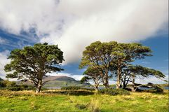 The Irish landscape, Ireland, nature Stock Images