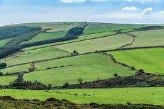Irish meadows Stock Photography