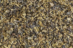 Irish moss seaweed. Background of dried Irish moss seaweed (Chondrus crispus) rich in iodine. It is harvested to make carrageenan, a thickening agent for jellies royalty free stock images