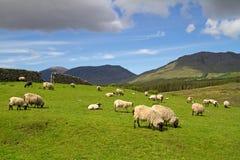 Irish mountains Stock Photography