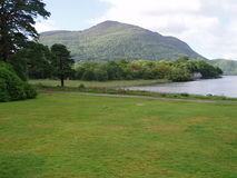 Irish National Park Killarney. Picture taken in the Irish National Park Killarney - west of Ireland royalty free stock image