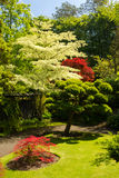 Irish National Stud's Japanese Gardens.  Kildare. Ireland Royalty Free Stock Photos
