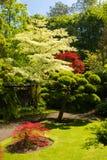 Irish National Stud's Japanese Gardens. Kildare. Ireland. The Japanese Garden in the Japanese Gardens & Irish National Stud of Kildare are the Finest Japanese royalty free stock photos