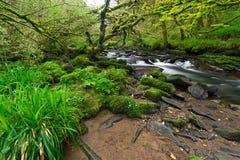 Irish nature scenery with creek. Irish creek of Clare Glens in Co. Limerick Royalty Free Stock Photo