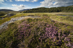 Irish Peatland Stock Image