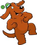 Irish Setter Stock Photography