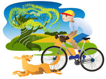 Irish Setter and cyclist. Irish Setter runs alongside a cyclist on the road along the field Royalty Free Stock Photography