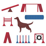 Irish setter in a dog show, competition items hoop, tunnel and pipes. Stock Image