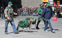 Irish setter parade Stock Photos