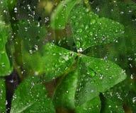 Irish shamrock behind wet window Royalty Free Stock Photography