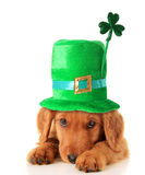Irish Shamrock uppy Royalty Free Stock Photos