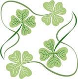 Irish Shamrocks Stock Images